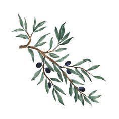 f6792d95c72525e5dc277c9fb22e2ec6--olive-tattoo-olive-branch-tattoo